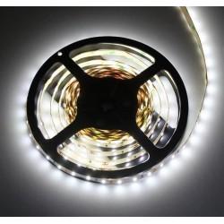 Taśma 300 LED typ 3528 biały zimny 25W 5m 25W IP20 DL